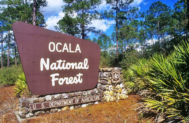 Ocala National Florest na Flórida