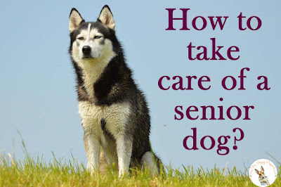 How to take care of a senior dog?