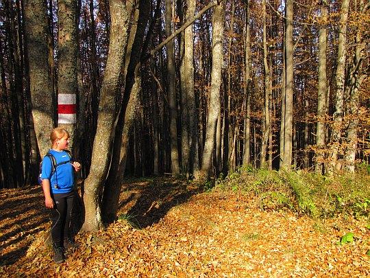 Przy drzewie z ogromnym znakiem szlaku.