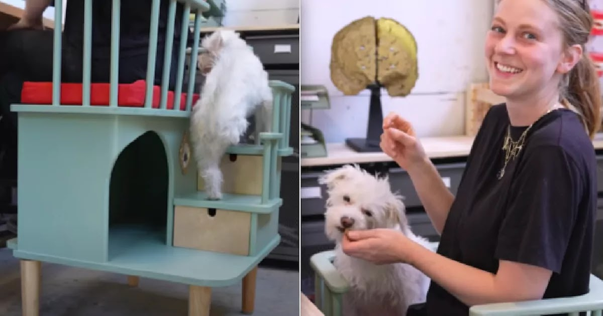 Inventor Creates Special Chair That Allows Needy Pets To Sit By You While You Work