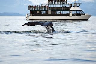 أعاقت الحيتان طريق btc مسجلة رقمًا قياسيًا جديدًا للأسعار ، تم بيع أكثر من 93 ألف BTC منذ الذروة