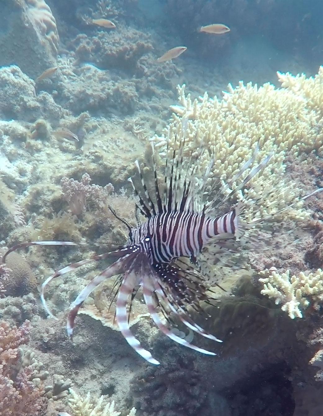 Thousand Islands Travel Guide pramuka island snorkelling