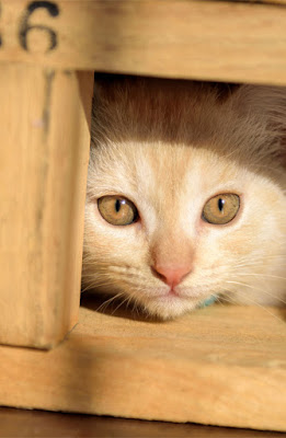 Three important choices to give your dog or cat. Photo shows kitten hiding