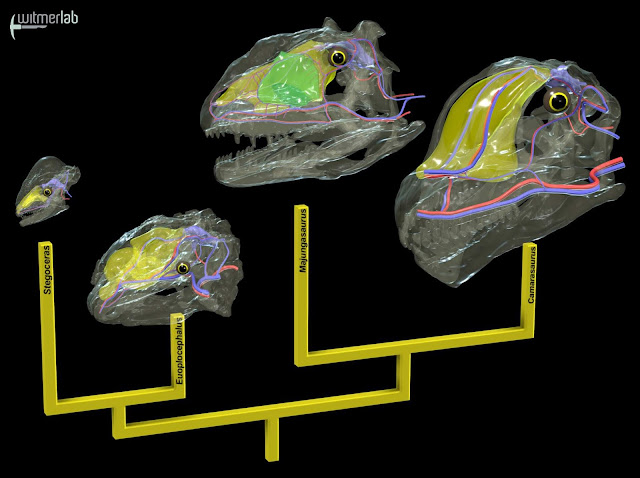 New study shows huge dinosaurs evolved different cooling systems to combat heat stroke