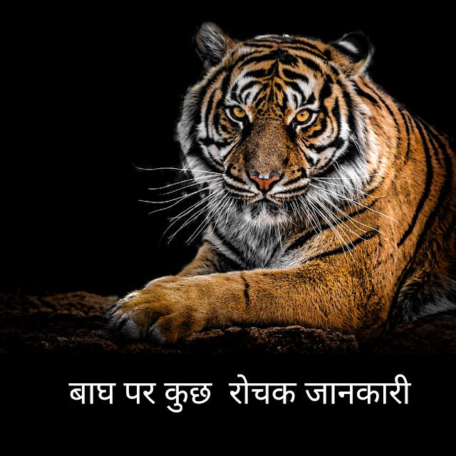 बाघ पर कुछ  रोचक जानकारी  । Information About Tiger