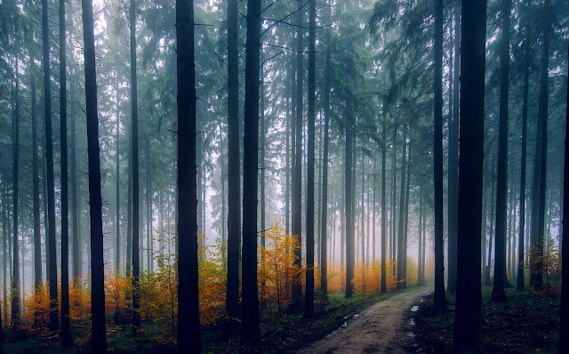 22 Best Forest Travel Ultra HD Wallpapers 5K and 8K For Desktop