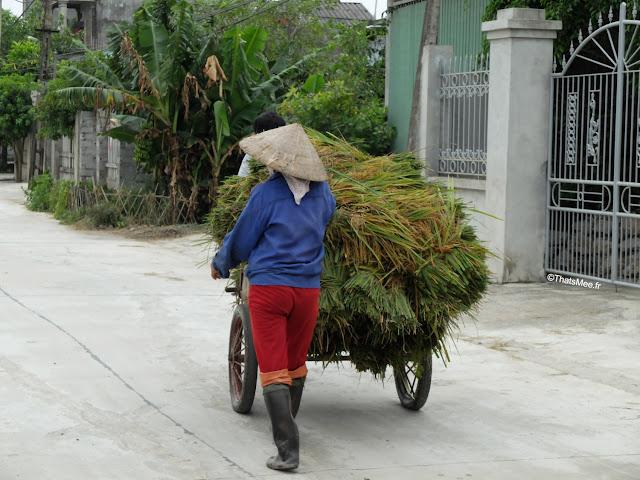reserve van long ninh binh vietnam campagne paysanne foin riz charette