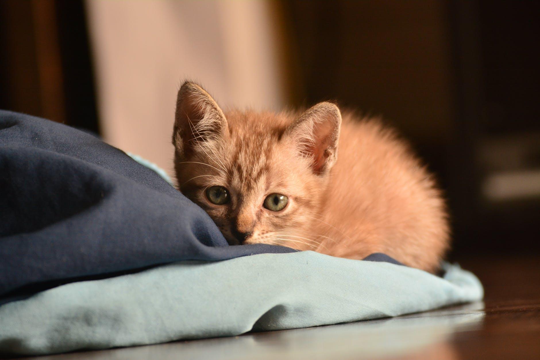 Pensez au type de chat qui convient à votre style de vie et à votre maison.