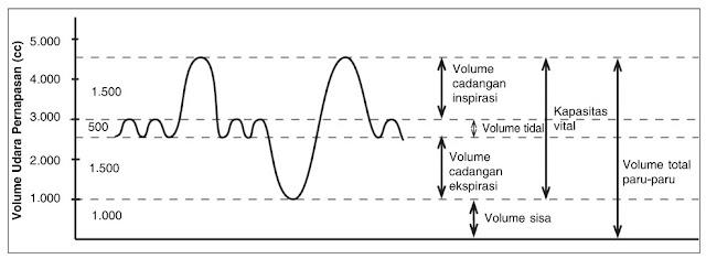 Volume Udara Pernapasan Pada Manusia