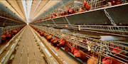 Emplois Poulter Breeding AU Canada Fresher 2019