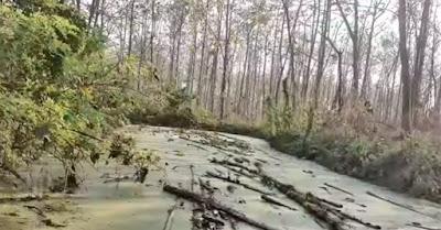Spot surga mancing belut di hutan jati