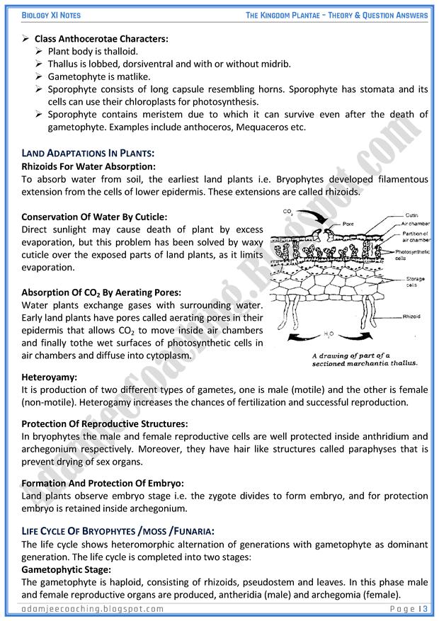 kingdom-plantae-descriptive-question-answers-biology-11th