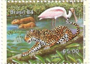 Selo Pantanal e os animais