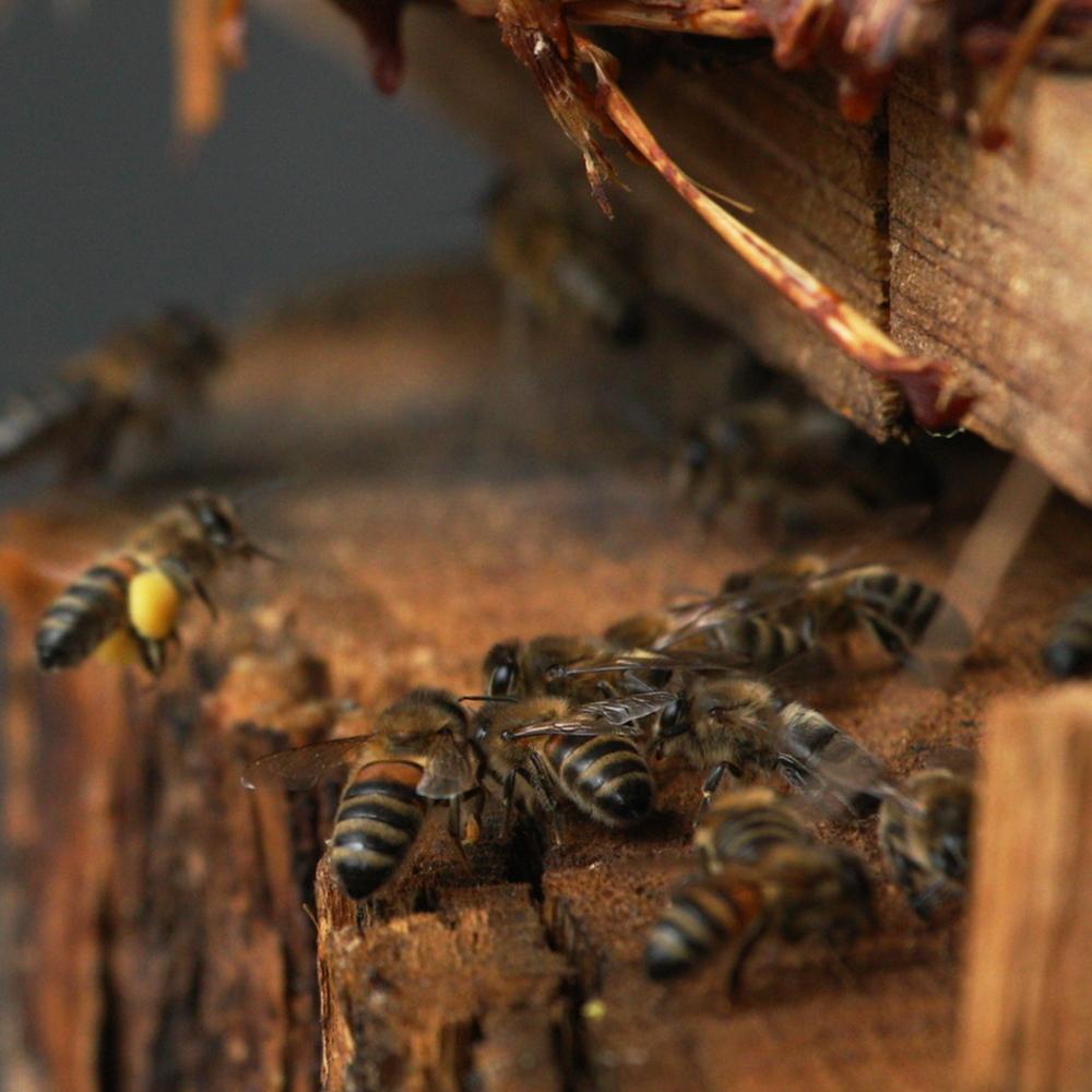 Etre avec les abeilles