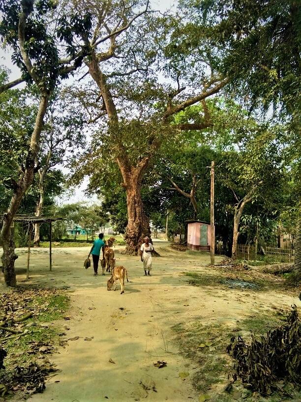 Assam village photography, Assam village scenery