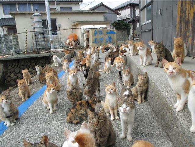 """"""" اوشيما """" جزيرة تحكمها القطط في اليابان"""