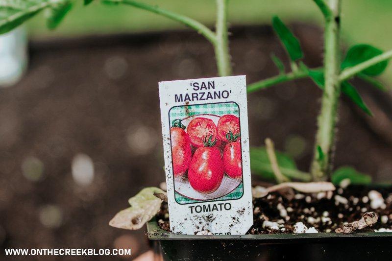San Marzano tomato plant!