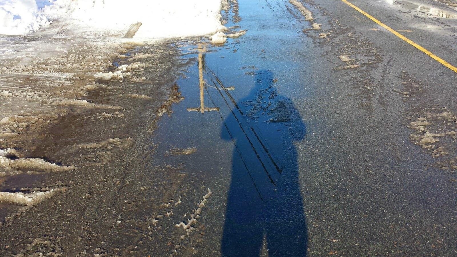 puddles bring reflections and new views to the world around us