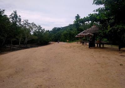 pasir hutan mangrove