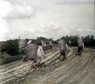 para pemetik teh dan keranjangnya di naga huta kota pematangsiantar