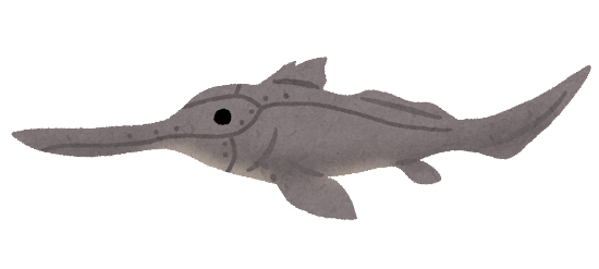 テングギンザメのイラスト