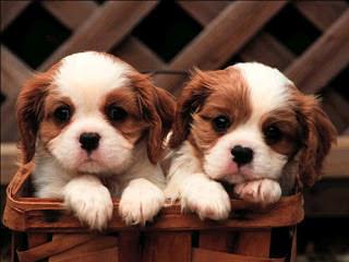 Tatlı-Köpek-Fotoğrafları