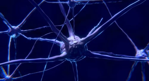 Google helps map human brain tissue