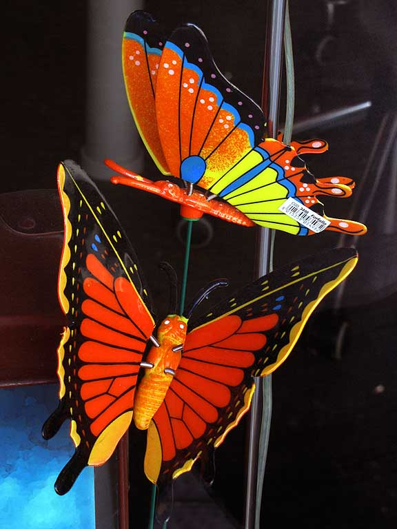 Colorful butterflies, shop window, Livorno