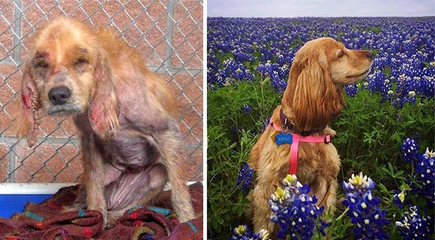 before-after-animals-1