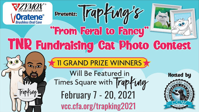 "The Cat Fanciers' Association, ZYMOX & Oratene Present: TrapKing's ""From Feral to Fancy"" TNR Fundraising Cat Photo Contest"