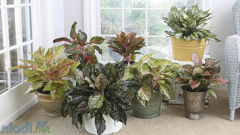 pilihan jenis tanaman hias indoor yang cocok untuk mempercantik ruangan di dalam rumah
