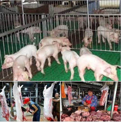 Người chăn nuôi thì khổ sở, con buôn lợn thì thao túng thị trường, chính quyền ở đâu?