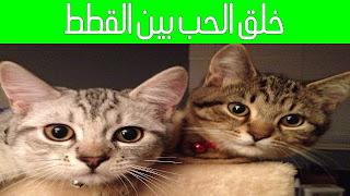 كيف تجعل القطط تحب بعضها ولا تتشاجر فيما بينها