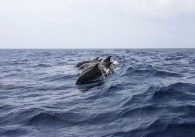 Admire dolphins in natural habitat OF GUJARAT