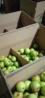 pengepakan buah apel malang