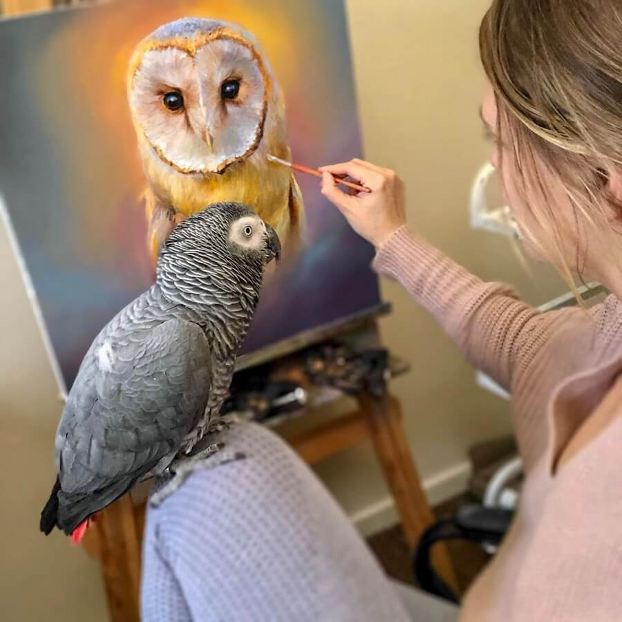 03-Barn-Owl-Eve-Sundown-www-designstack-co