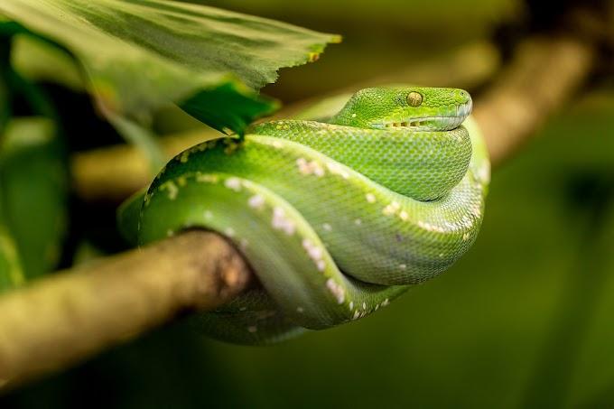 Soñar con serpientes verdes