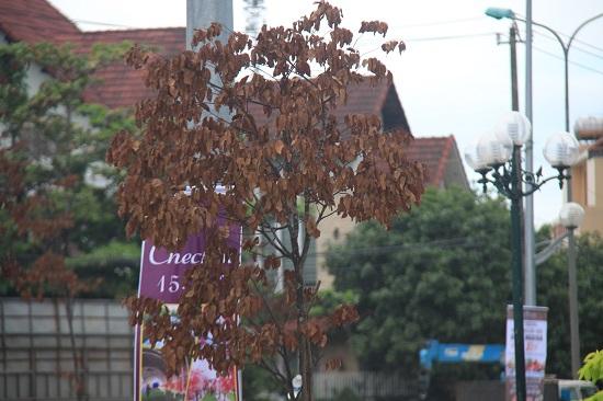 Quảng Ngãi: Hàng trăm cây xanh đột nhiên chết khô