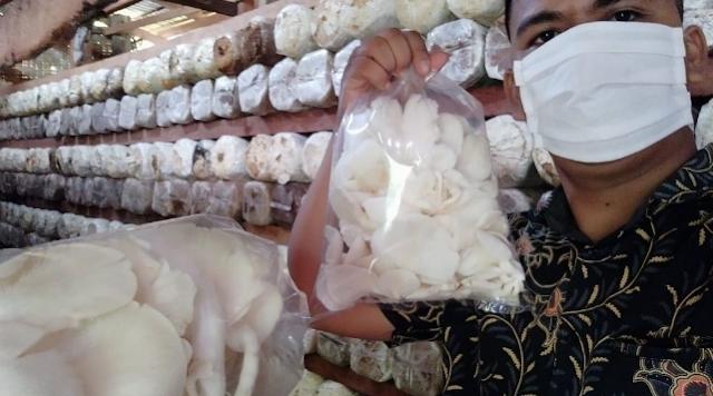 prospek bisnis usaha budidaya jamur tiram