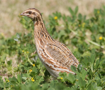 https://www.organicupperegypt.com/2019/07/Marketingofquails-onFacebook.html