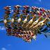 Toverland, na Holanda, trará uma Wing Coaster para 2018