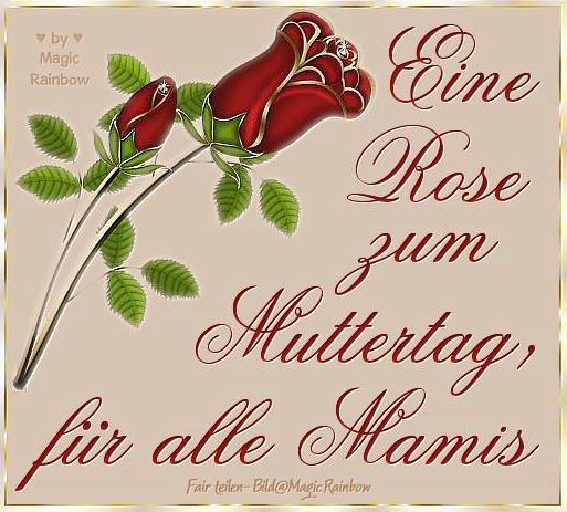 Rose zum Muttertag fur alle Mamis