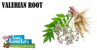 Home Remedies For Bipolar Disorder: Valerian Root