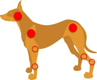 escaras em cães