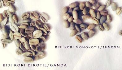 Perbedaan biji kopi lanang dan biasa