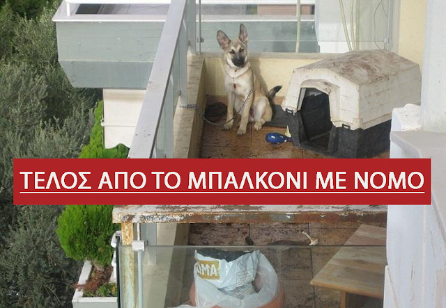ΤΕΛΟΣ,τα σκυλιά στο μπαλκόνι  – ΔΕΙΤΕ τι μας λέει ο νέος νόμος για τα κατοικίδια και ποια είναι τα πρόστιμα.