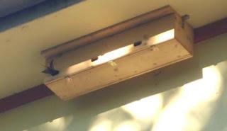 Ein Mauersegler fliegt in den bereitgestellten neuen Nistkasten