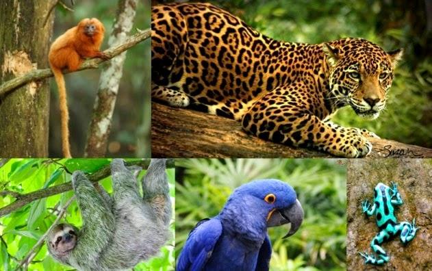 Art at Hosmer: Endangered Animals of the Amazon Rainforest