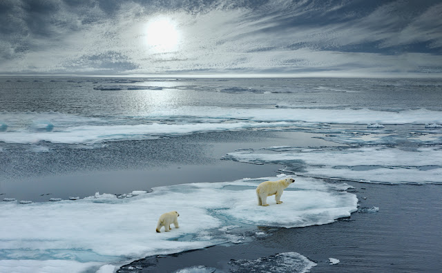Okjokull glacier has melted like others as climate change displaces polar bears