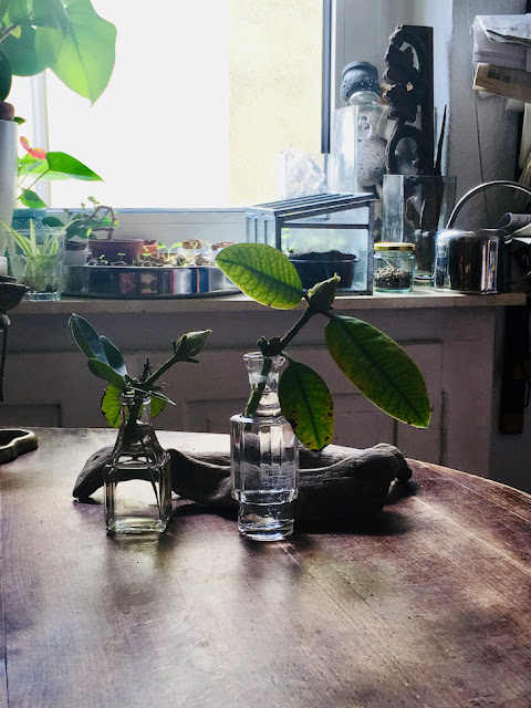 Altes Glas, Blätter, Knospen, Totholz